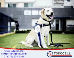 'Rene' El perro policía se retira de la Policía Federal