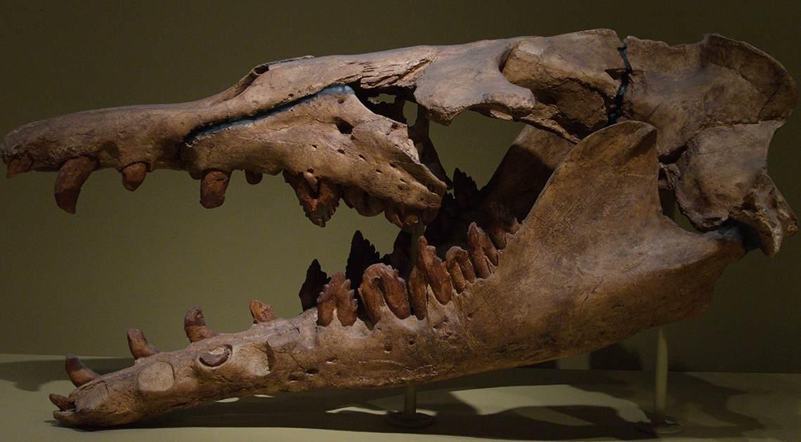 basilosaurus 2